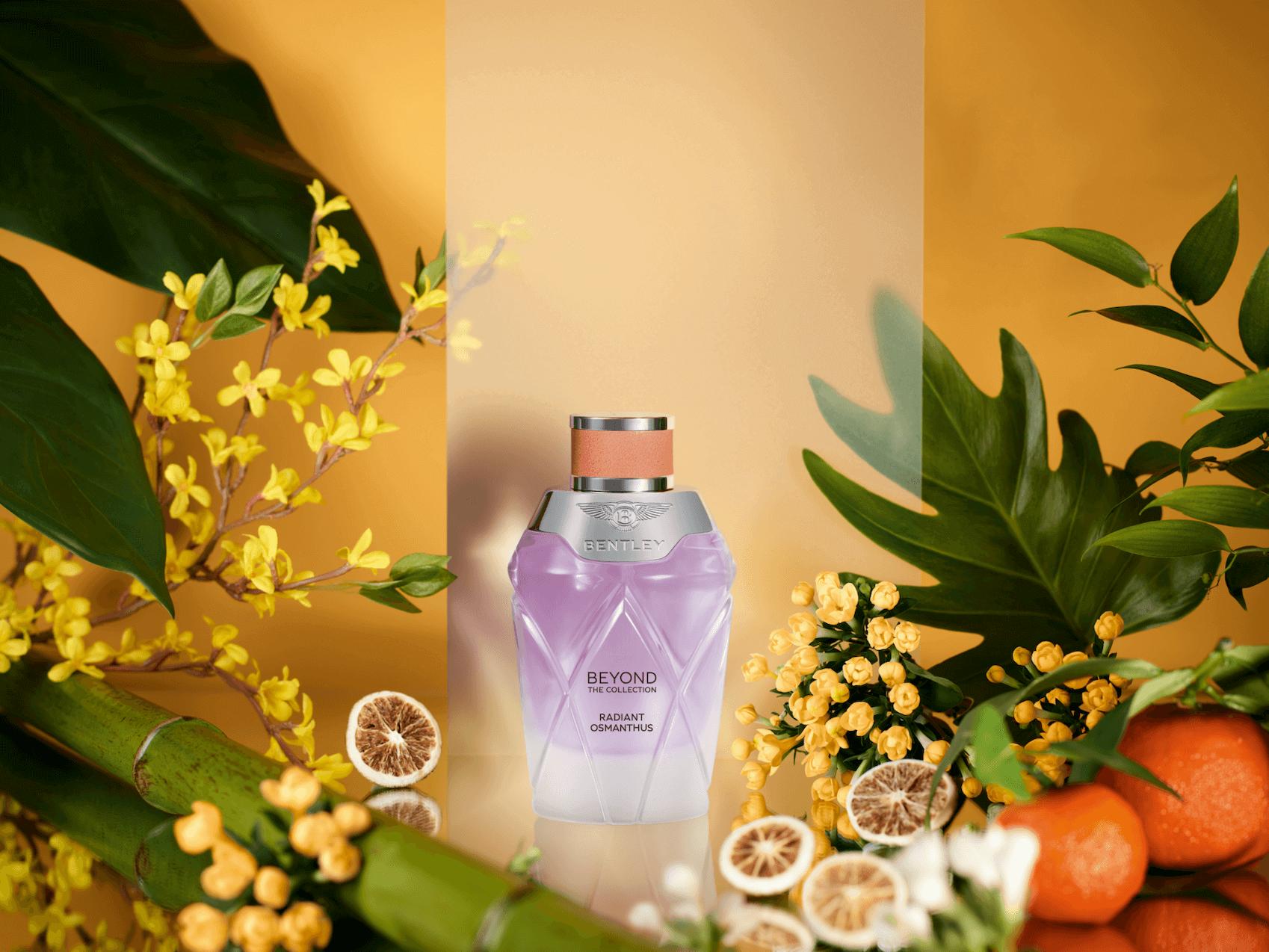 Bentley Fragrances parfüm bilgi